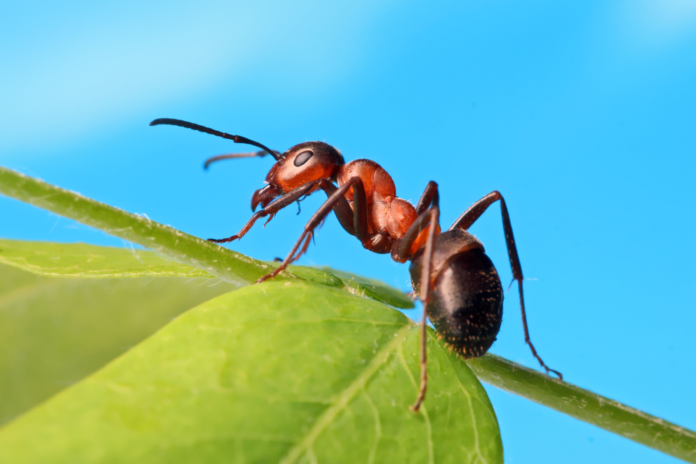 The ant myth busted