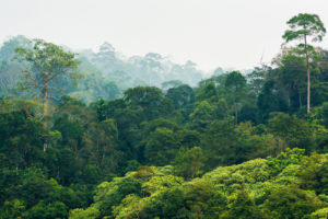 The role trees play in saving the world