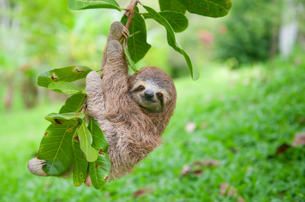 The beginning of sloth life explained