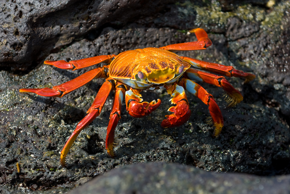 The predators of crustaceans