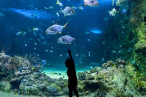 The house that became an aquarium