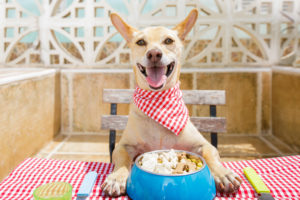Why your pet needs a healthy diet