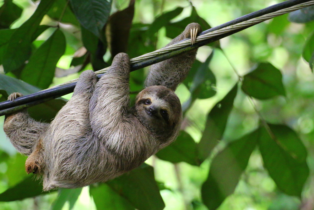 The truth behind the life of a sloth